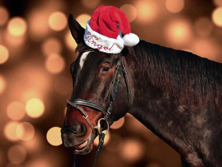 Julshow på Ånge ridklubb söndag 10 december kl. 15:00 till 18:00.